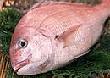 日本と韓国で好む魚がこんなに違うの?
