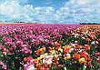 キム・ヨンラン 「夢の畑に春心」